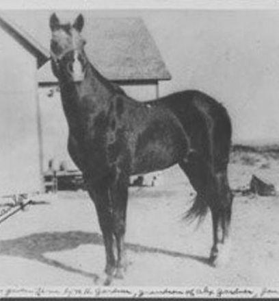 Traveler mature horse BEFORE sm.jpg