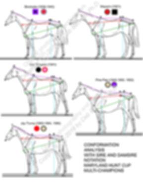 Conformation Pedigree Analysis Md Hunt C