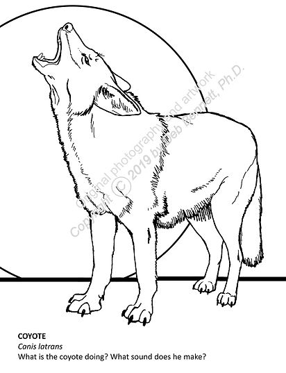 Simple Coyote howling c text smw.jpg