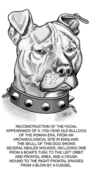 Skull Scarface Dog Facial Reconstruction