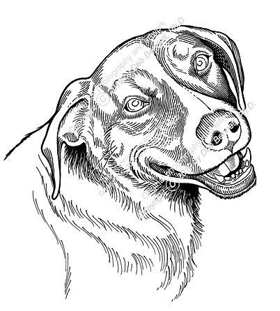 Ruby Dog Happy Girl smw.jpg