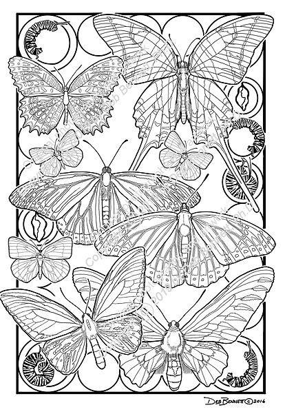 Butterflies and Caterpillars smw.jpg