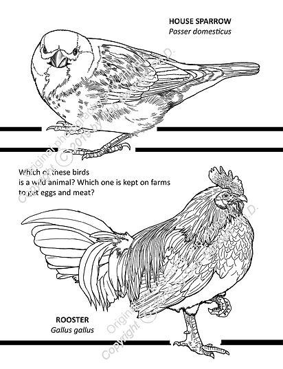 Simple Rooster and Sparrow c text smw.jp