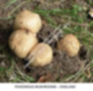 Mushrooms VINDO SMW.jpg
