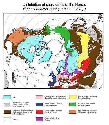 Map Pleistocene subspecies Euras NA smw.