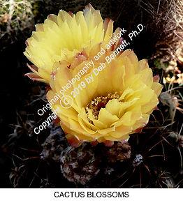 Cactus flowers TURLOCK smW.jpg