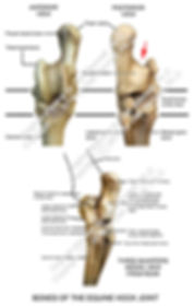 Horse Bones of the Hock photo label smW.