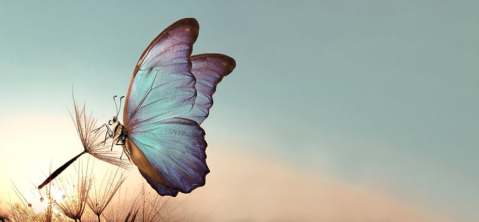 Natural%20pastel%20background.%20Morpho%