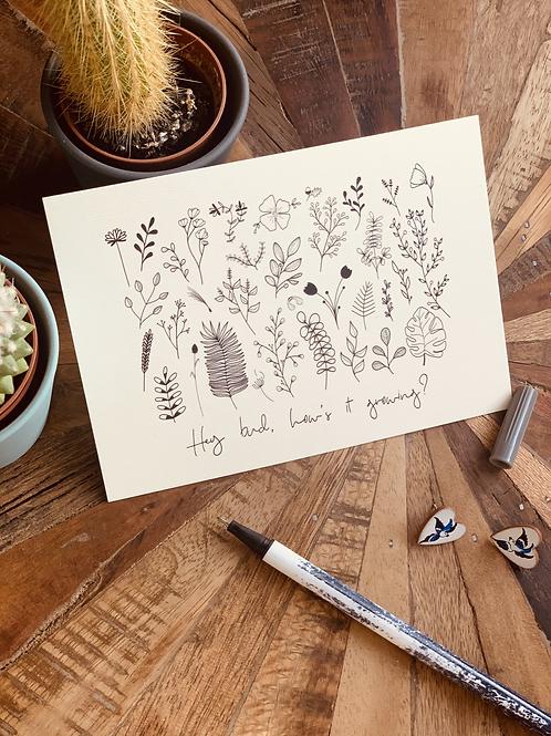 Botanical Postcards - 5 pack