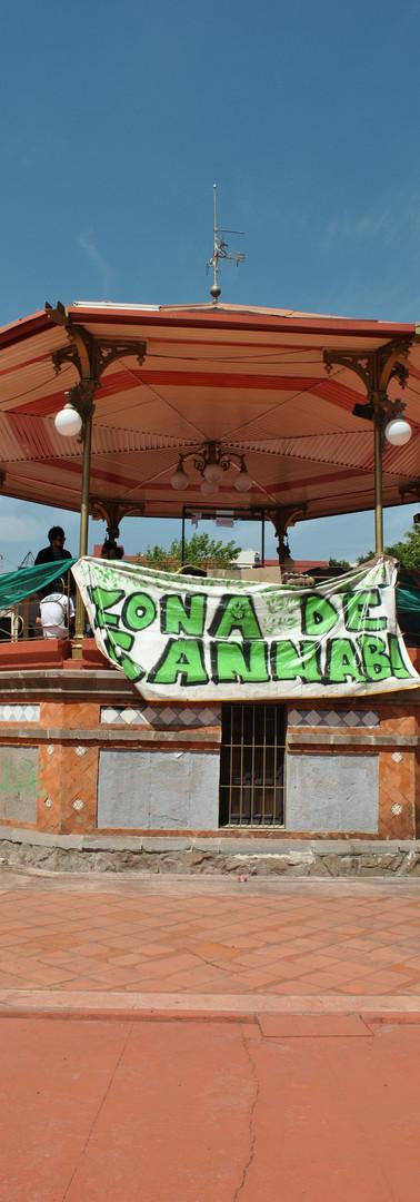 plantón cannábico_portada.jpg