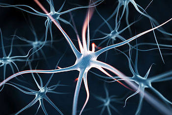 comment_cultiver_des_neurones_pour_repar