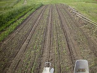 crop weeding.jpg