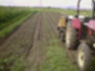 vegetable planting.jpg