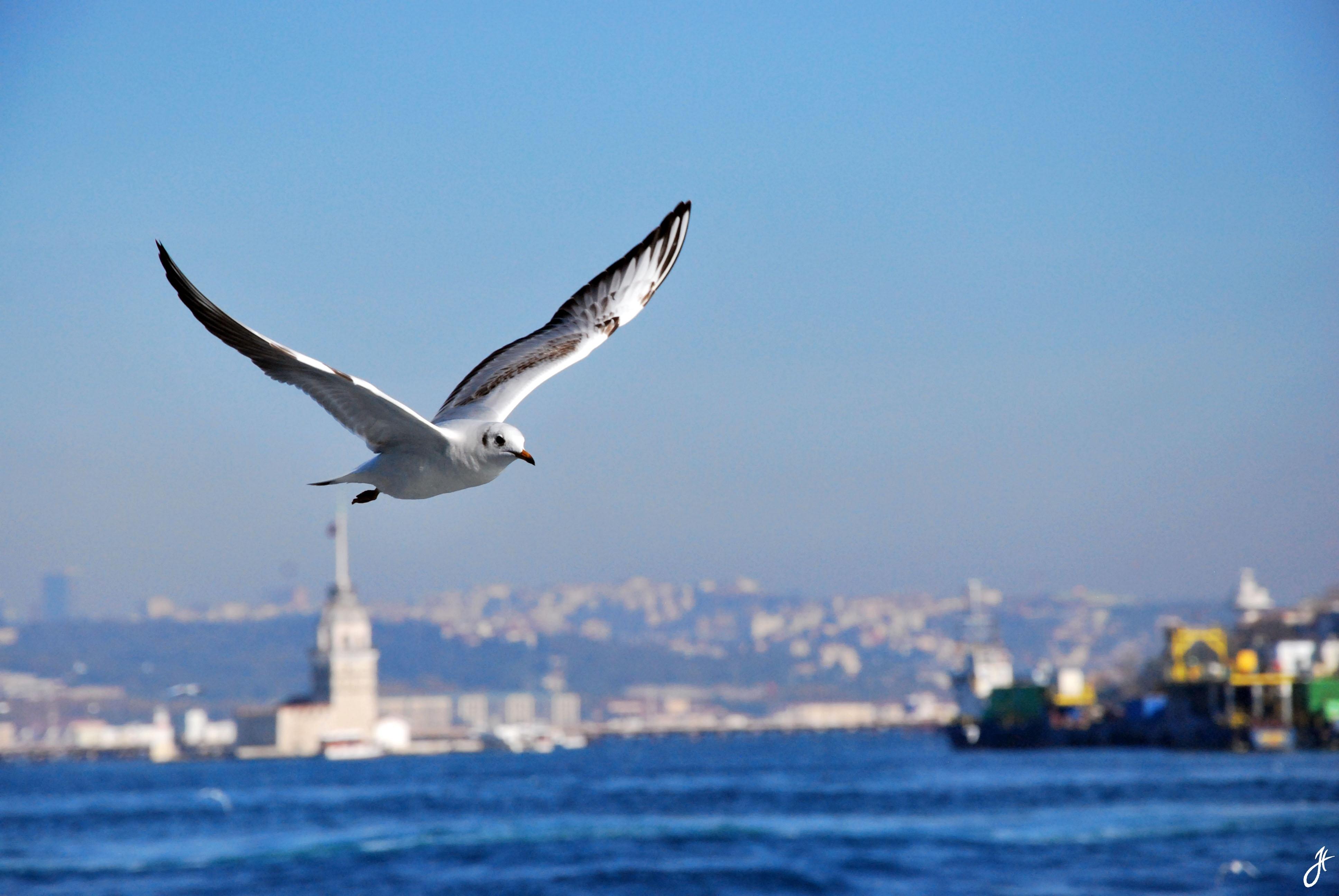 Istanbul, Turkey '10