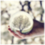a-tree-reflection-in-a-glass-ball-held-b