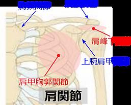 肩関節左.png