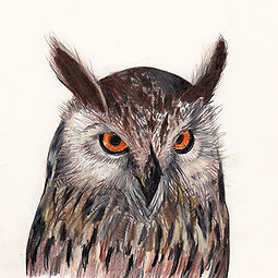 Illustration, Drawing of Great Horned Owl, by Kazaan Viveiros