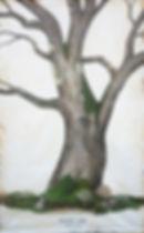 White_Oak_web.jpg