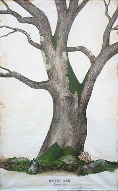 Giant painting of White Oak tree (Quercus alba)