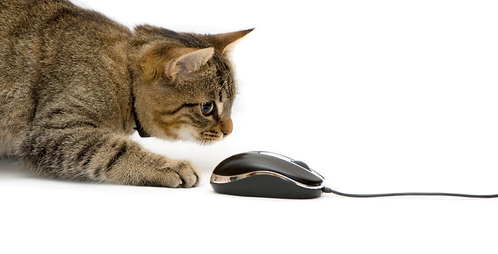 cat clickin mouse for gift certiiate purchase