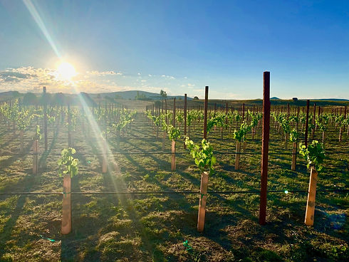 Wineries & Breweries in Gila County