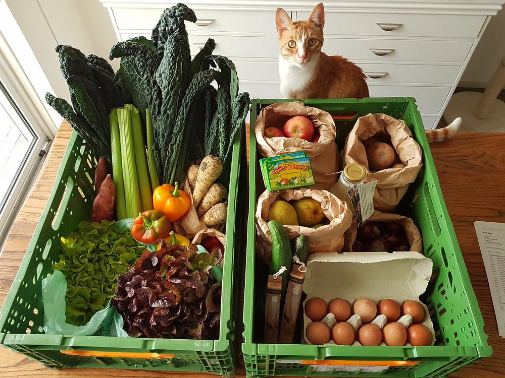 Organic produce, Wellness Place international