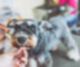 Dog face (4).jpg