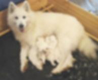 Alyona med sina småttingar 🐾💞🐾.jpg