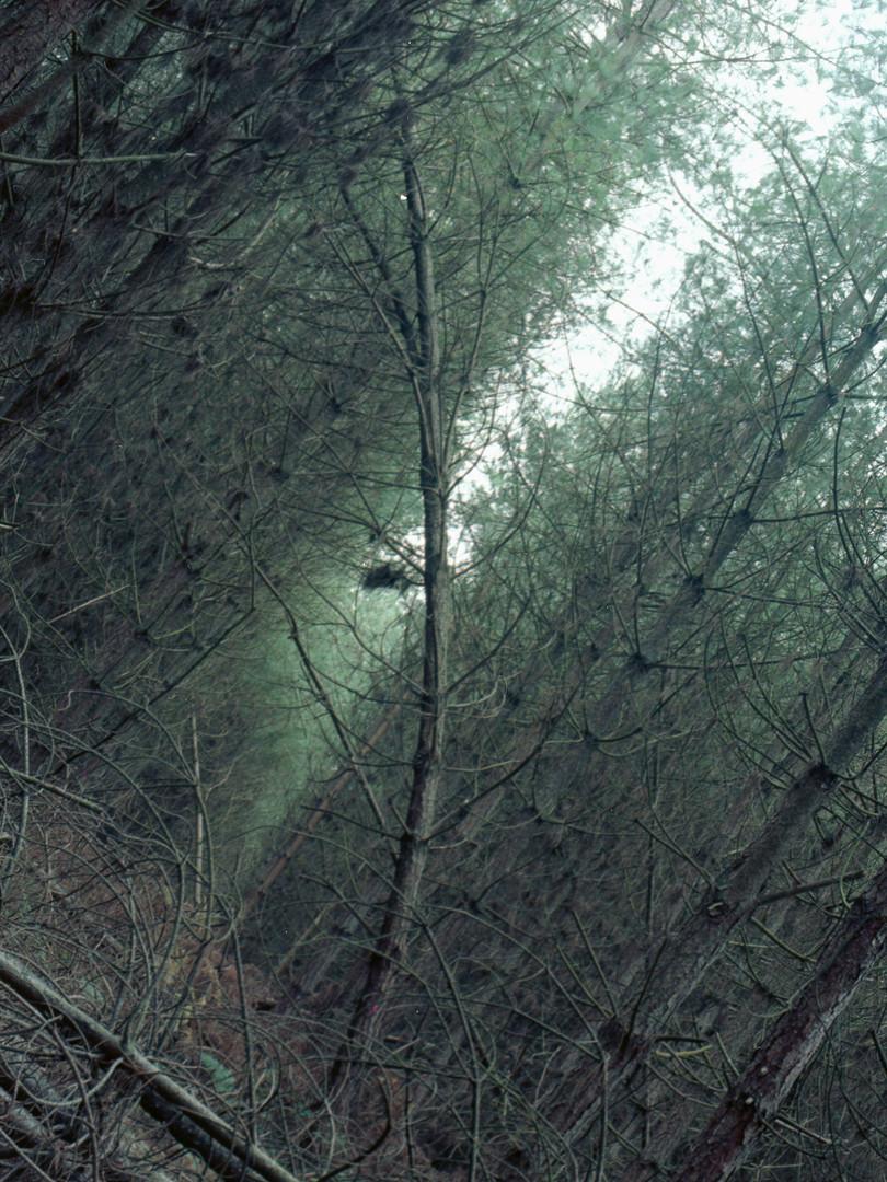 trees011 copy2.jpg