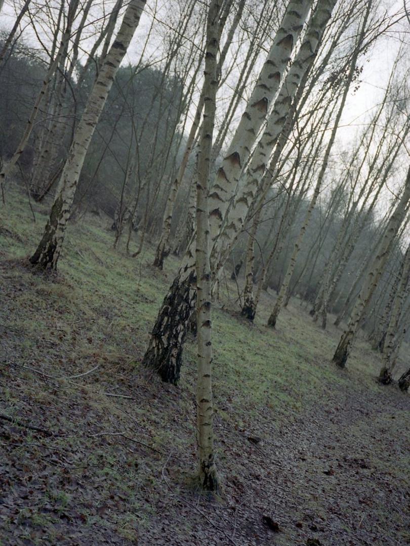 tree028_edited.jpg