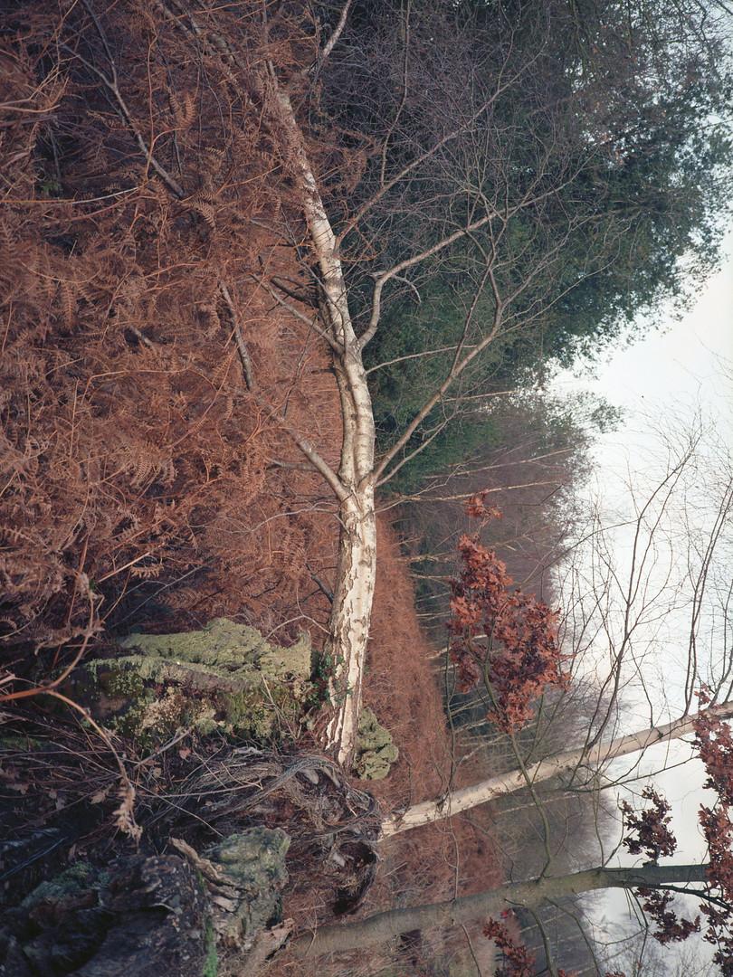 tree009.jpg