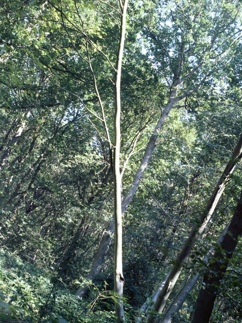 trees031.jpg