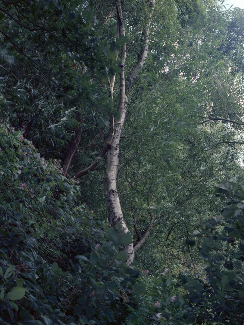 trees033.jpg