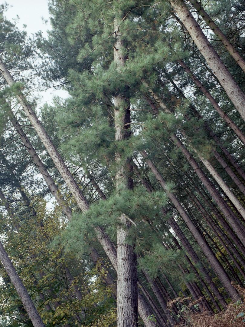 trees015 copy2.jpg