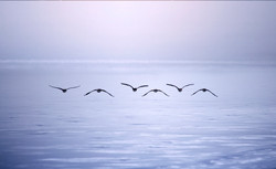 Birds flying over frozen lake