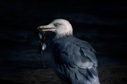 Eating Bird