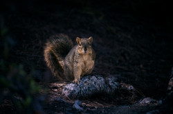 Squirrel in light