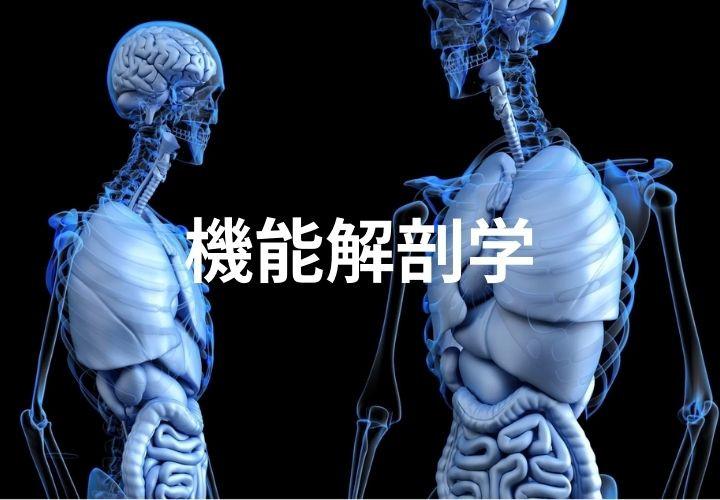 機能解剖学.jpg