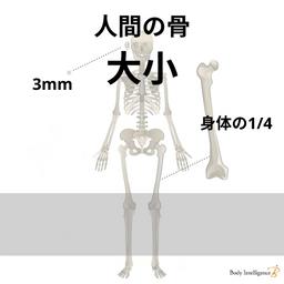 人体にある1番大きな骨と1番小さい骨