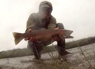 Fish Report: Spring Cutthroat