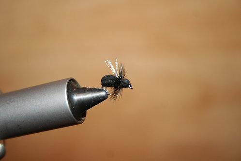 Deep Creek's Black Ant