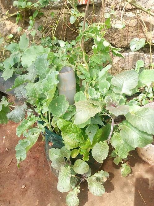 Mwengenye Greens Growing Bag