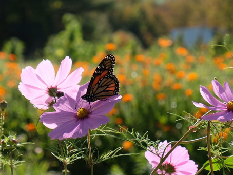 3 Ways We Support Our Pollinators