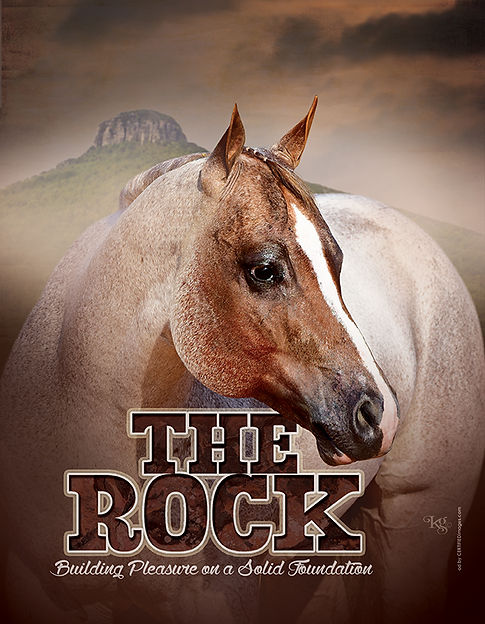 The Rock AQHA Stallion