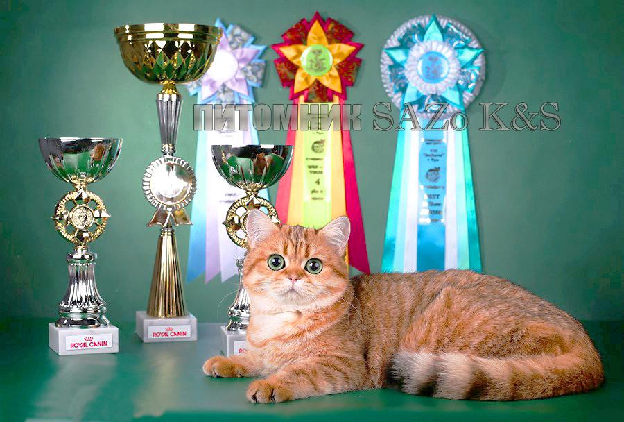 зрительное слуховое картинка награда кошки особенности, ибо нити