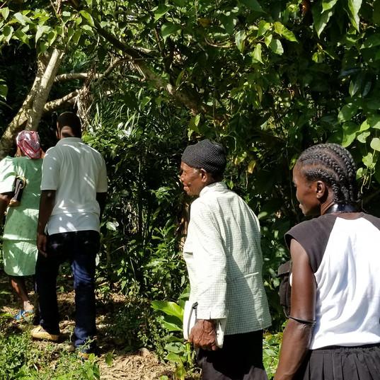 Haitian Coffee Farmers.