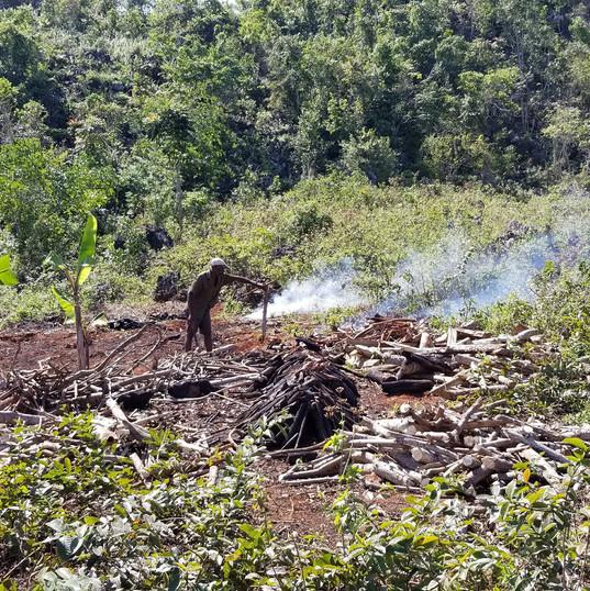 Haitian Mountaint Tops.