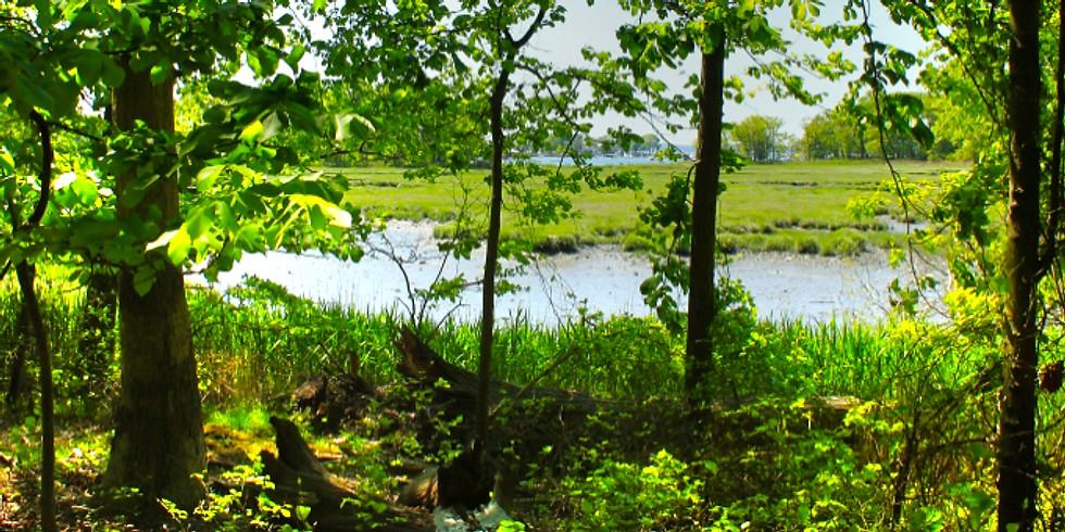 Explore Vlei Marsh: Walk with Winnakee Land Trust