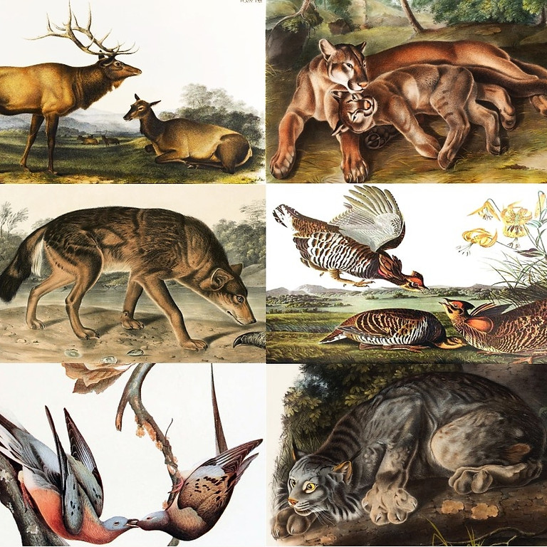 Vanished Fauna of the Catskill Mountains