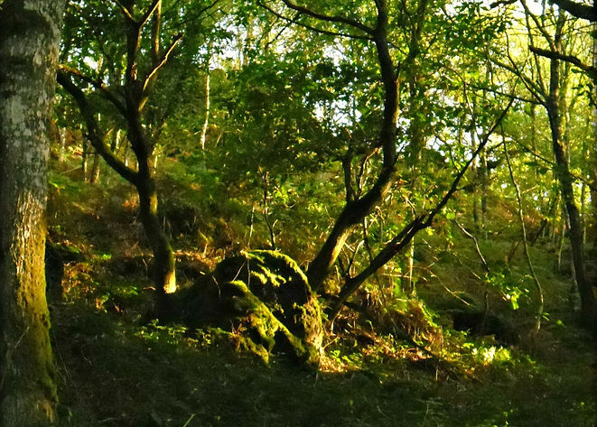 Brocéliande forêt.jpg